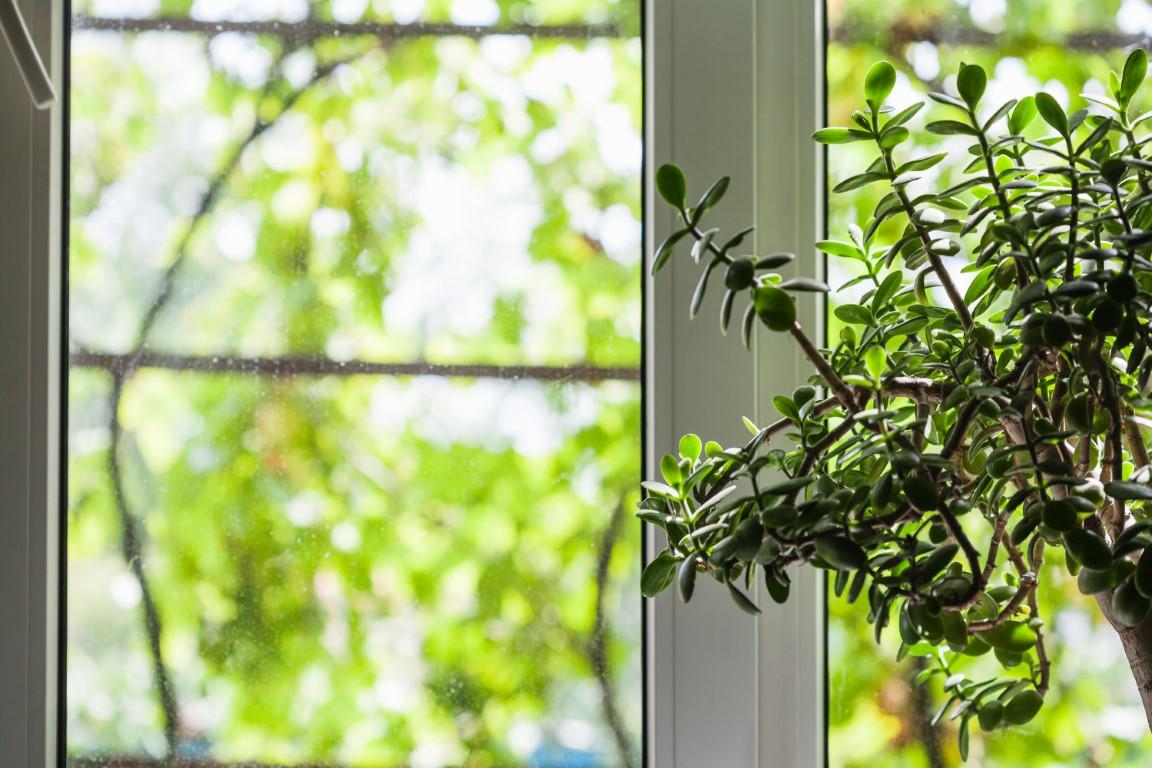Quelles fenêtres choisir pour sa maison neuve